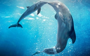 Winter and Hope Photo Credit: Dolphin Tale 2